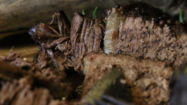 Rinderbraten-Highland-Cattle-Dittmer-oben-durchgekocht